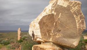 Living Desert and Sculptures